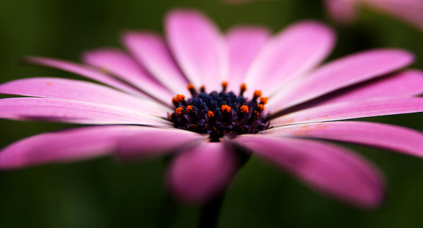 Flower Photograph - Focus On The Middle by Kim Lagerhem