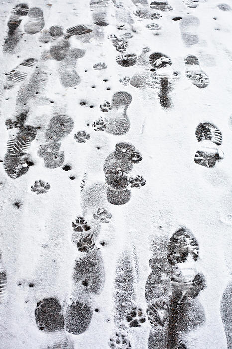 Animal Photograph - Footprints by Tom Gowanlock