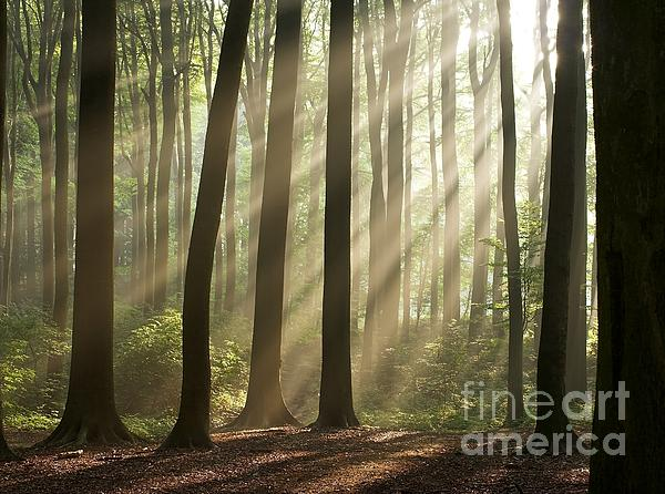 Forest Photograph - Forest by Boon Mee