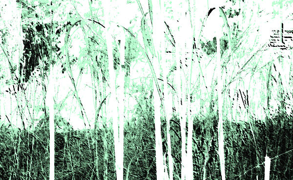 Abstract Photograph - Forest For The Trees by Lenore Senior