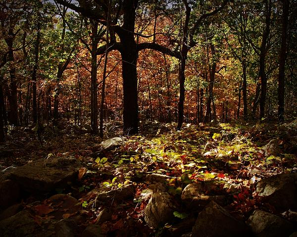 Forest Digital Art - Forest Illuminated by Linda Unger