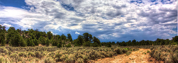 Taos Photograph - Forest Road by William Wetmore