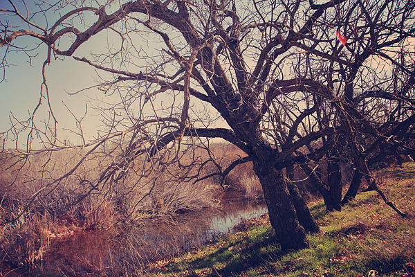 Sycamore Grove Park Photograph - Forever In My Heart by Laurie Search