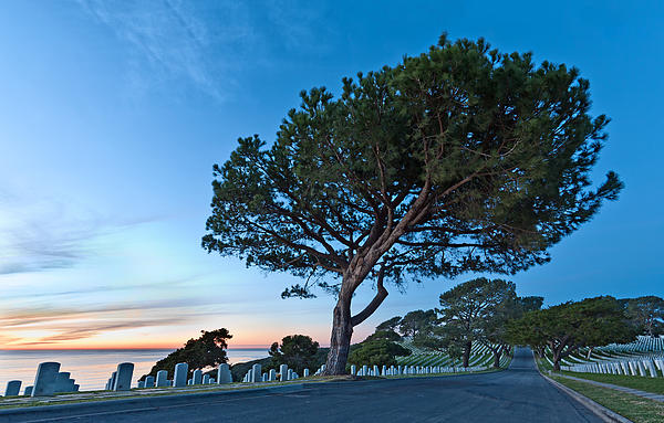 Fort Rosecrans Photograph - Fort Rosecrans National Cemetery by Alexis Birkill