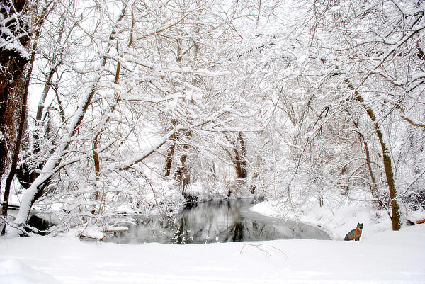 Snow Scene Photograph - Foxy Snow by Emily Stauring