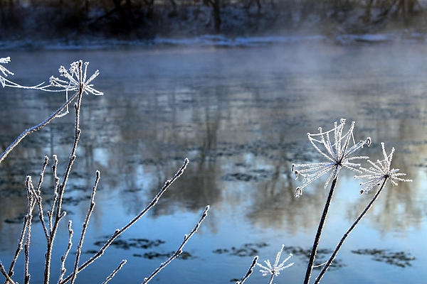 Hoar Frost Painting - Frosty Webs And Weeds by Hanne Lore Koehler