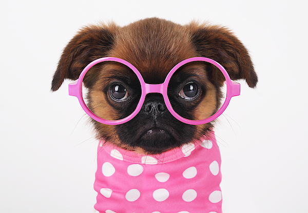 Funny Puppy Photograph by Retales Botijero