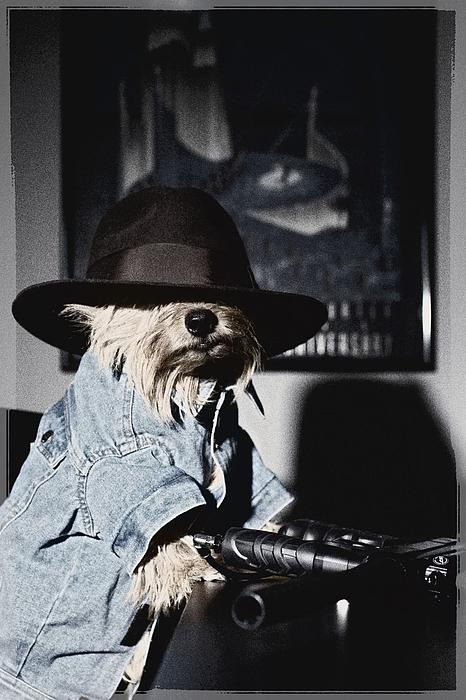 Norwich Terrier Photograph - Gangster Dog by Susan Stone
