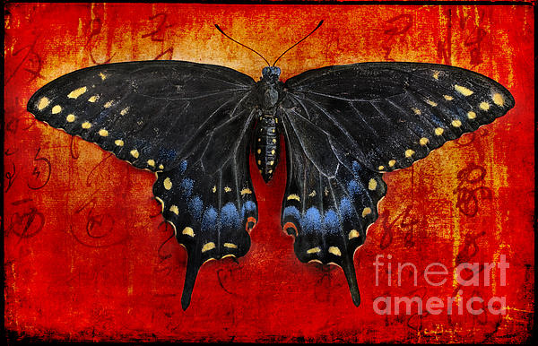 Swallowtail Photograph - Garden Collection by Elena Nosyreva