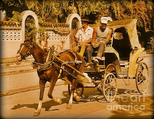 Horses Photograph - Gee Haw by John Malone