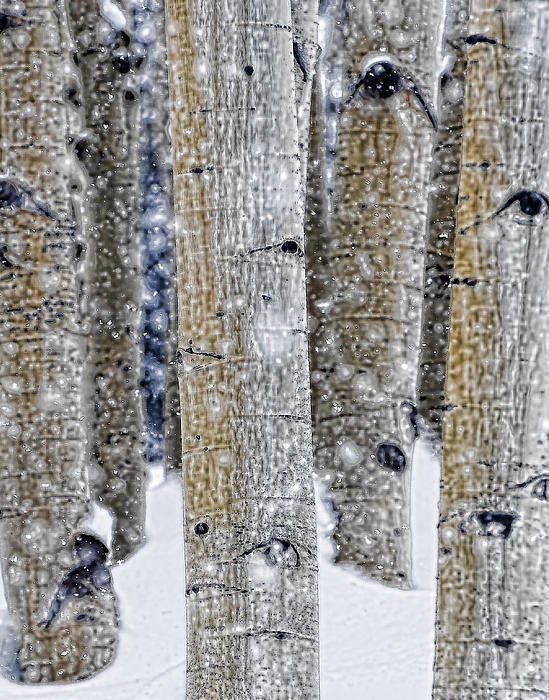Aspen Photograph - Gently Falling Forest Snow by Don Schwartz