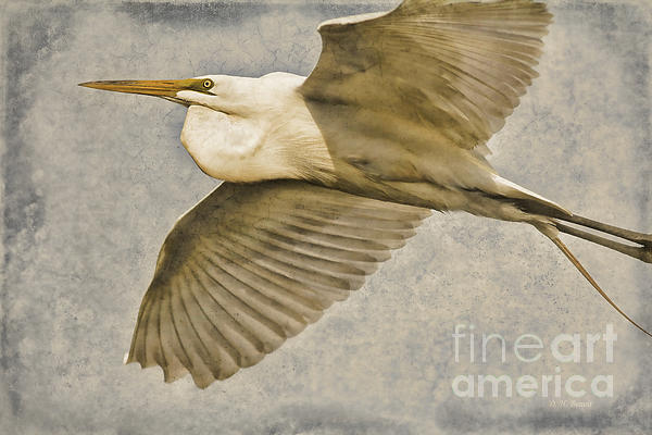 Egret Photograph - Giant Beauty In Flight by Deborah Benoit
