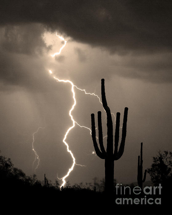 Weather Photograph - Giant Saguaro Cactus Lightning Strike Sepia  by James BO  Insogna