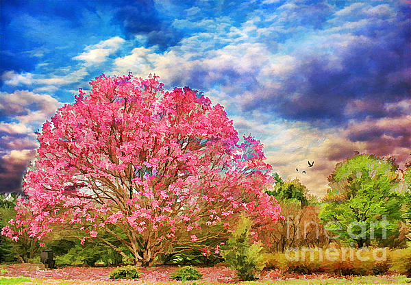 Agriculture Photograph - Glorious Spring by Darren Fisher