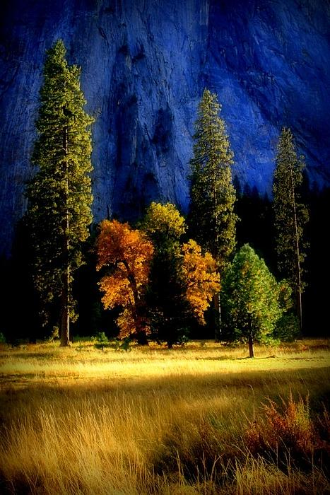 Trees Photograph - Glowing Trees by Lynn Bawden