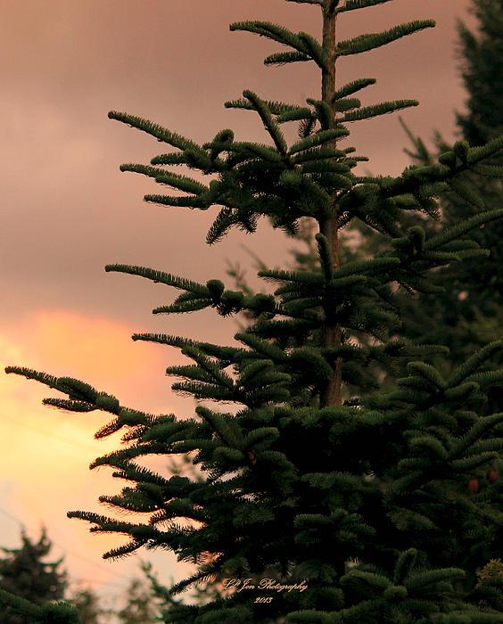 Sunset Photograph - Gods Gift by Jeanette C Landstrom
