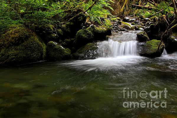 Gold Creek Photograph - Gold Creek  by Tim Rice