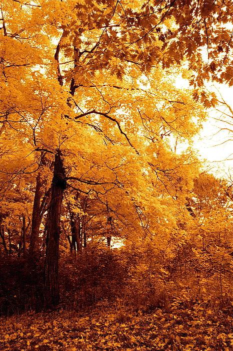 Golden Photograph - Golden Leaves 2 by Jocelyne Choquette