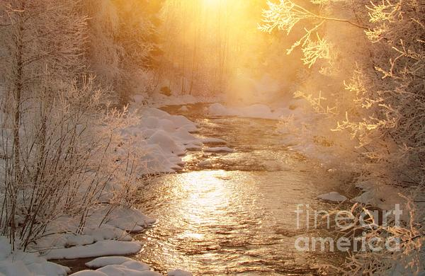 Nature Photograph - Golden Light by Sylvia  Niklasson