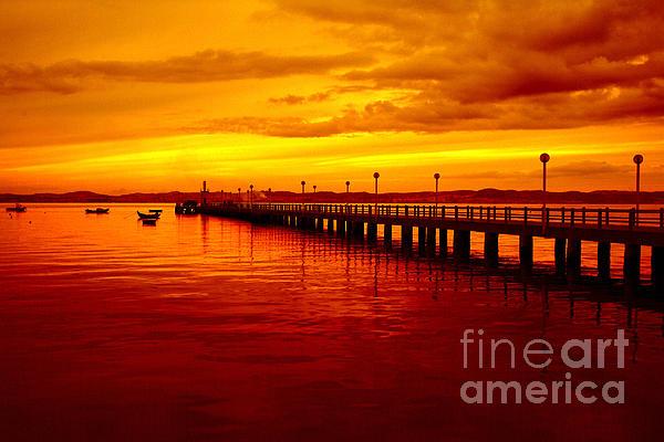 Golden Nature Photograph - Golden Nature by Boon Mee