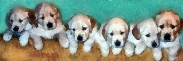 Golden Retriever Photograph - Golden Puppies by Michelle Calkins