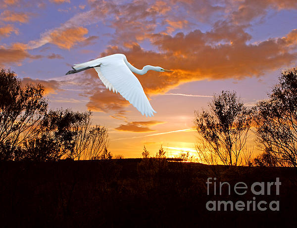White Photograph - Graceful Fly By by Adele Moscaritolo