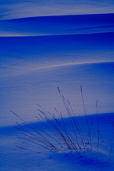 Chilly Photograph - Grasses And Twilight Snow Drifts by Irwin Barrett