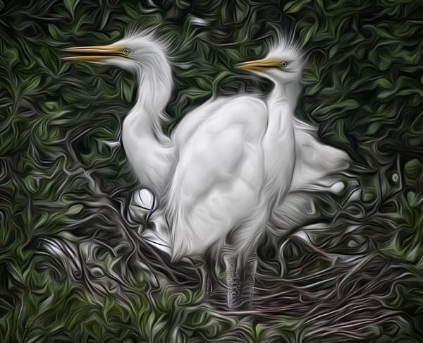 Avian Photograph - Great Egret Chicks by Hazel Billingsley