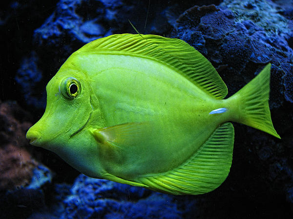 Fish Photograph - Green Fish by Wendy J St Christopher