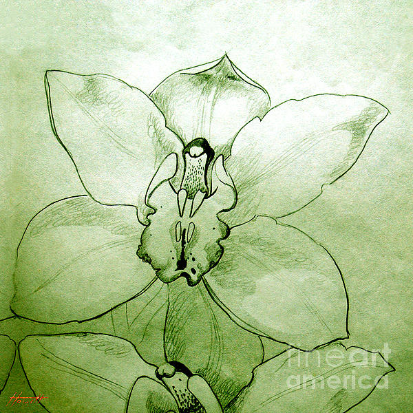 Flower Drawing - Green Orchid by Patricia Howitt