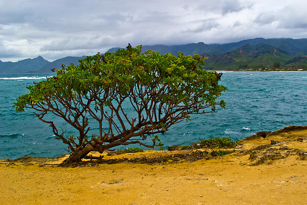 Hawaii Photograph - Green Tree by Matt Radcliffe