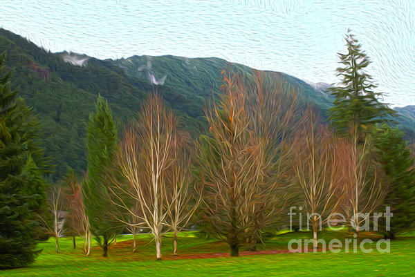 Winter Trees Photograph - Green Winter by Nur Roy