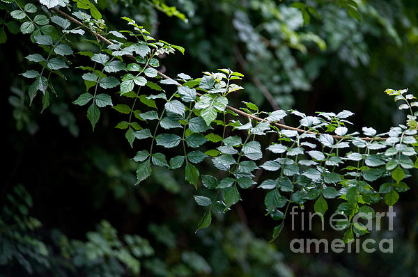 Green Photograph - Greens by Dan Holm
