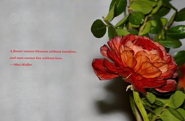Scarlet Card Photograph - Greeting Of Love by Sonali Gangane