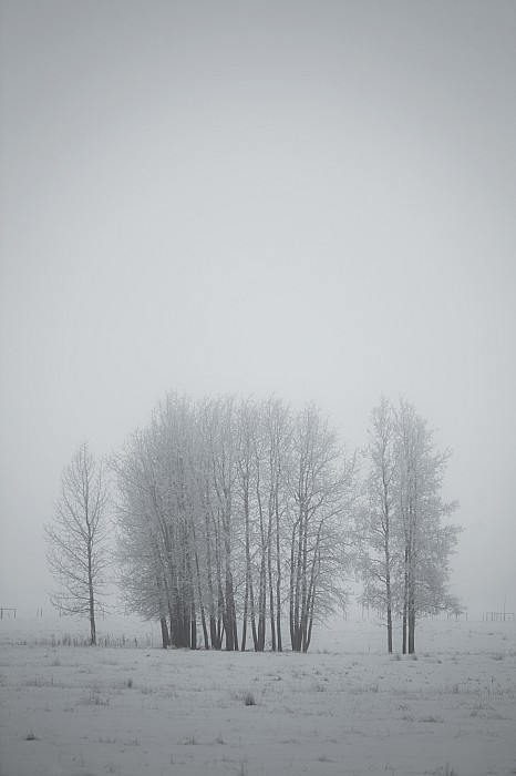 Light Photograph - Grove Of Trees Covered In Hoar Frost On by Roberta Murray