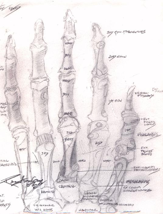 Hand Anatomy Sketchbook Drawing by Rebecca Tacosa Gray