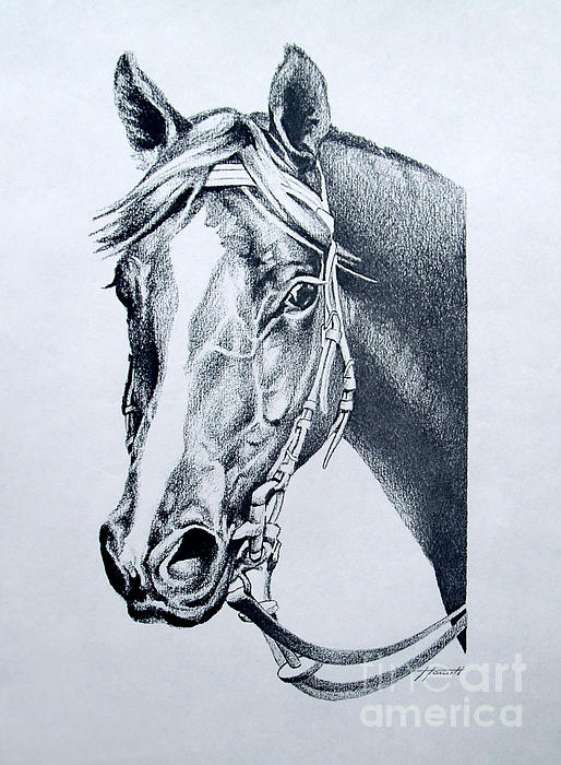 Horse Drawing - Handsome by Patricia Howitt