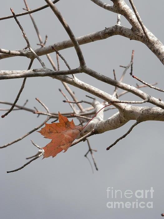 Hang In There Photograph - Hanging On by Margaret McDermott