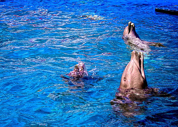 Dolphins Photograph - Happy Dolphins by Sandra Pena de Ortiz