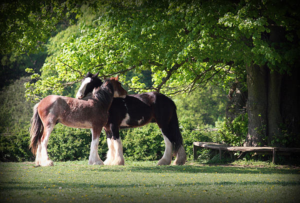 Horses Photograph - Happy Together by Stephen Norris