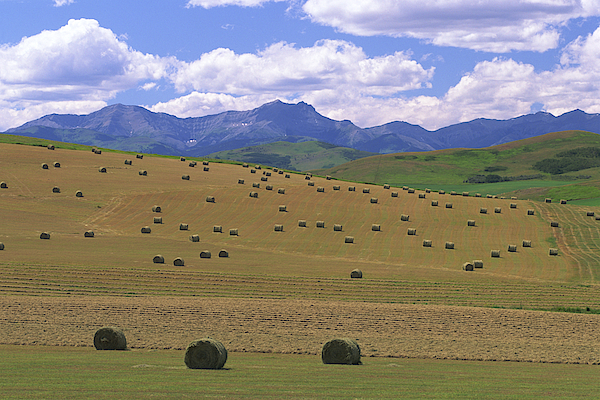 Hay Bales In Field Photograph by Comstock Images
