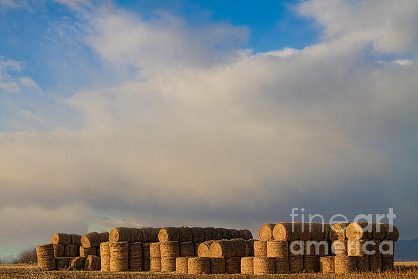 Hay Photograph - Hay Bales by James BO  Insogna