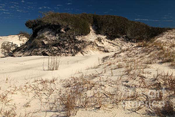 Florida Beaches Photograph - Healthy Dunes by Adam Jewell