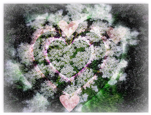 Queen Anne's Lace Photograph - Heart Of Hearts by Kay Novy