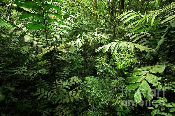 Rain Forest Photograph - Heart Of The Rain Forest - Costa Rica by Matt Tilghman