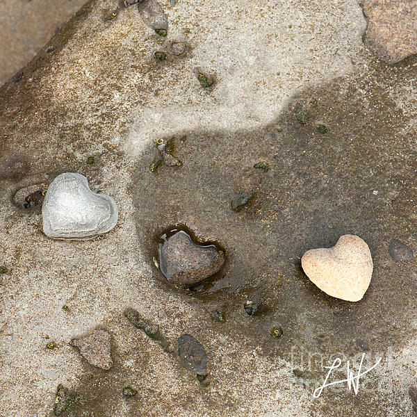 Beach Rocks Photograph - Heart Rock Love by Artist and Photographer Laura Wrede