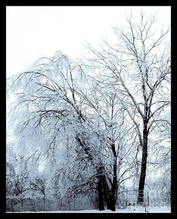 Photo Photograph - Heavy Ice Tree Redo by Marsha Heiken
