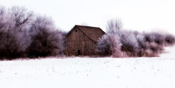 Barn Photograph - Hidden Barn by Julie Hamilton
