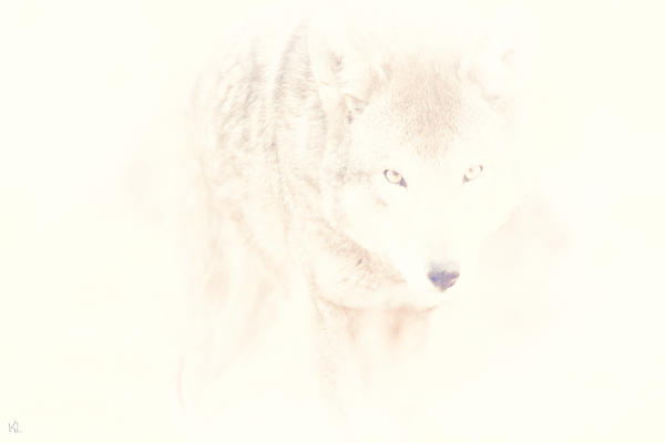 Wolf Photograph - Hiding Behind Those Eyes by Karol Livote