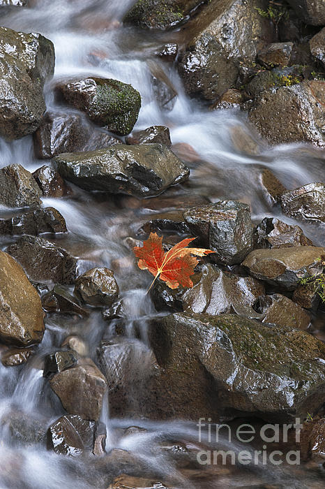 Waterscape Photograph - Hitching A Ride IIi by Sandra Bronstein
